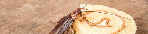 pest-control-cockroach